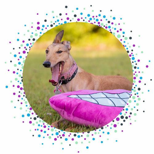 bitty-bites-therapy-dog-Mia